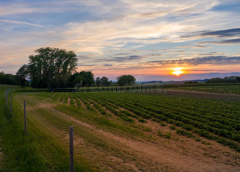 Sunset over a field - strawberry, evening sky royalty free stock photography