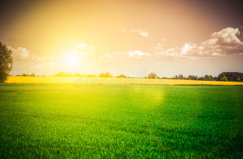 Sunset over field royalty free stock image