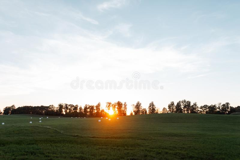 Sunset over a field among trees on the horizon. Bright blue sky and green grass. Landscape countryside at sunset in  summer. stock image
