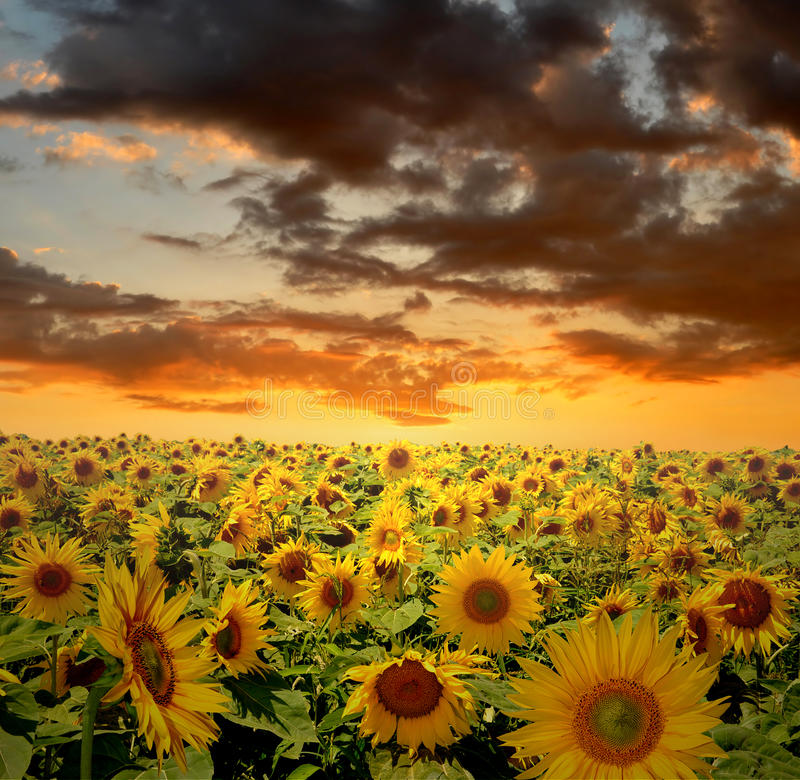 Sunset over fields royalty free stock photos