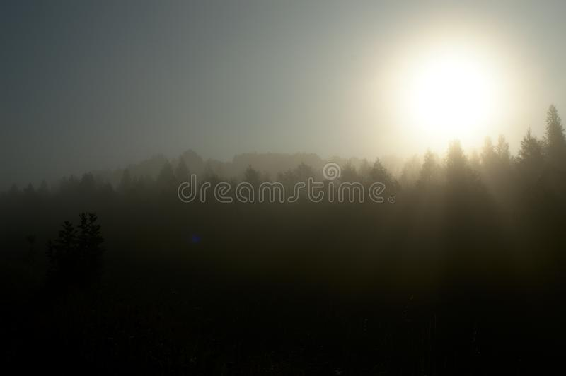 Sunset over the fog. Covering trees in the morning stock images