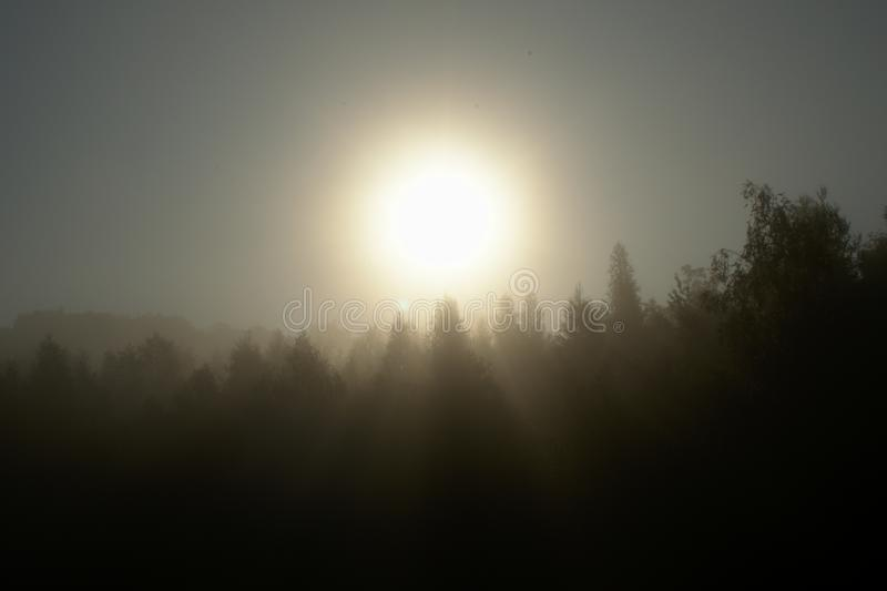 Sunset over the fog. Covering trees in the morning royalty free stock photography