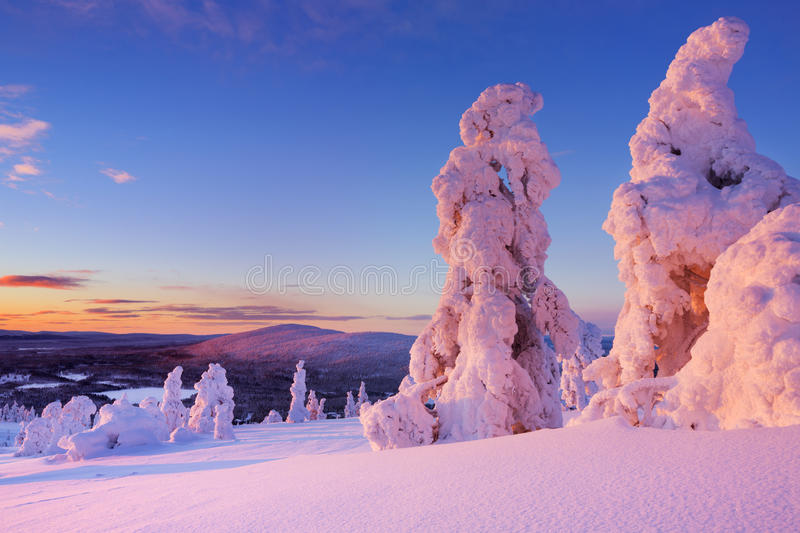 Sunset over frozen trees on a mountain, Finnish Lapland royalty free stock photography