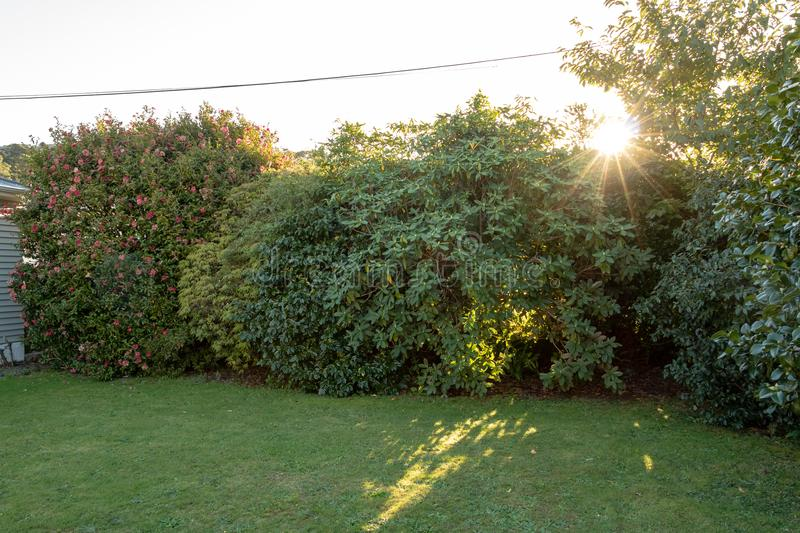 Sunset Over Garden Lawn. Sun peaks through the leaves as it begins to go down stock image