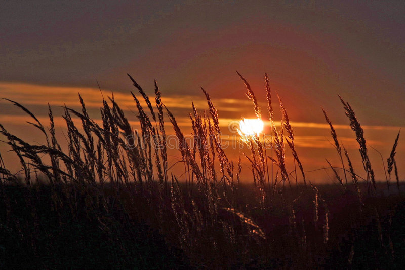 Sunset over grain field royalty free stock photo