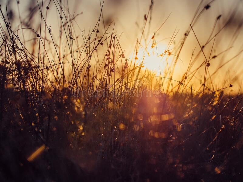 Sunset over grass in meadow royalty free stock image
