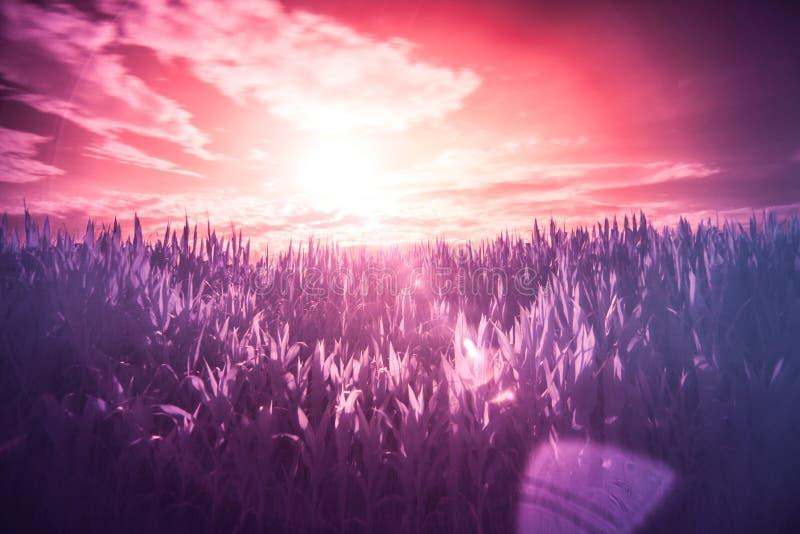 Sunset over grasses stock photo