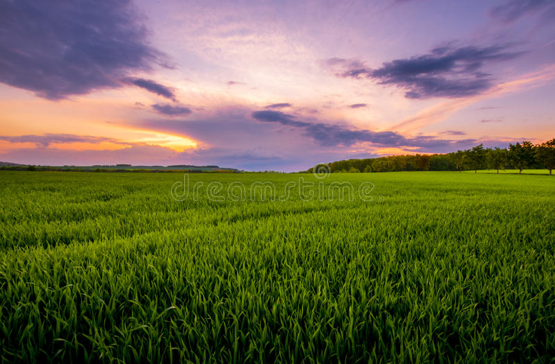 Sunset over the green field. stock photo