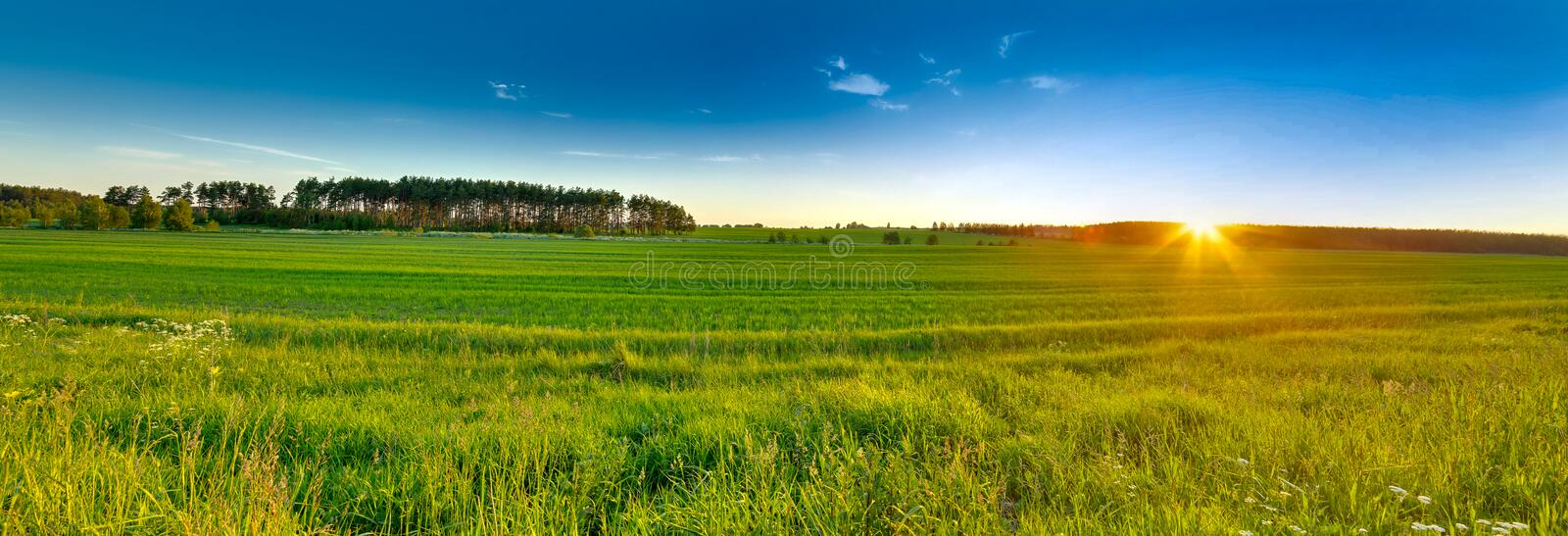Sunset over the green meadow and with a nice blue sky in the background royalty free stock images