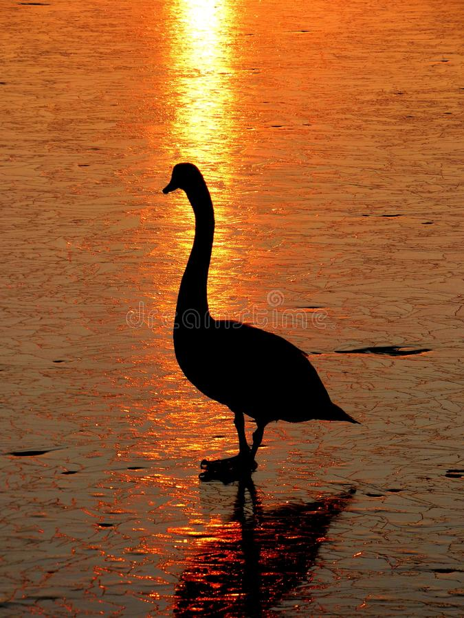 Sunset. Over the lagoon Pińczów stock photography