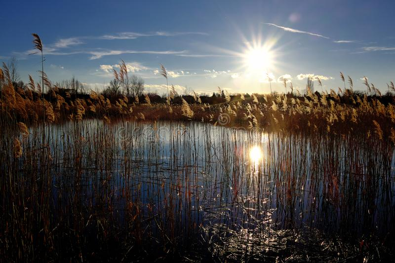Sunset over the lake in the backlight with sumbeam and reed royalty free stock image