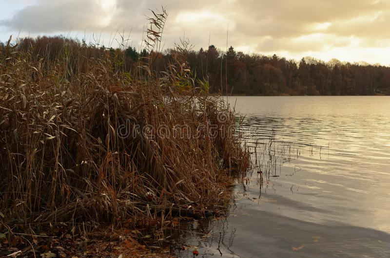 Sunset over lake with a reed in foreground royalty free stock image