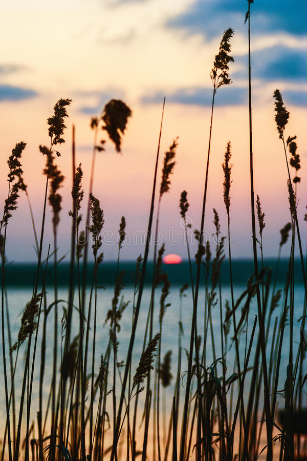 Sunset Over Lake Seen Through The Grass Stock Photo