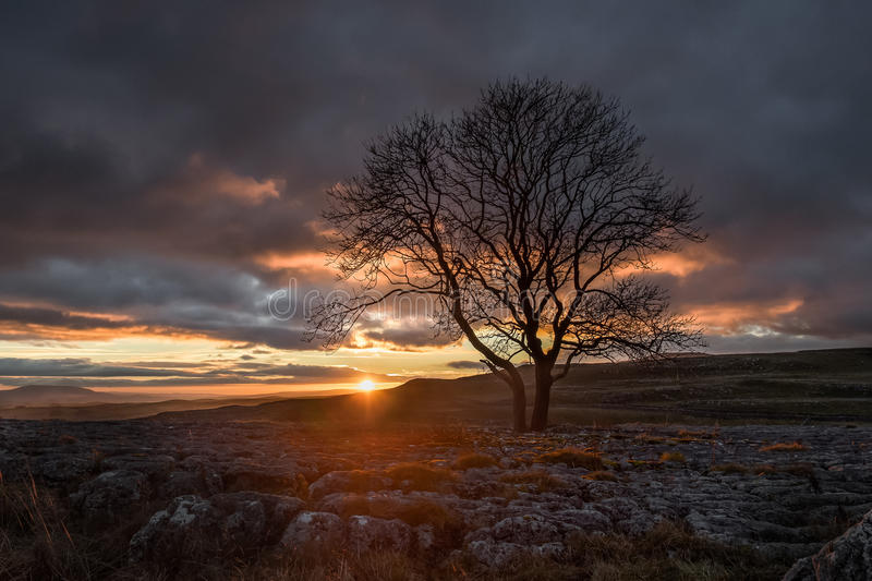Sunset over Lone Tree, Yorkshire Dales. Lone tree above Malham Cove, Yorkshire Dales royalty free stock photos