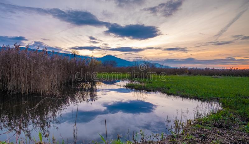 Sunset over the marshlands on the shores of the Upper Zurich lake Obersee, Rapperswil-Jona, Sankt Gallen, Switzerland royalty free stock photos