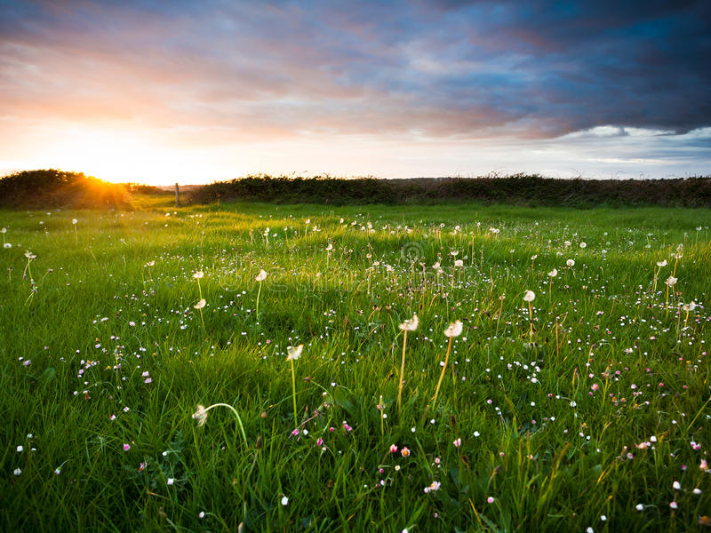 Sunset over meadow stock image