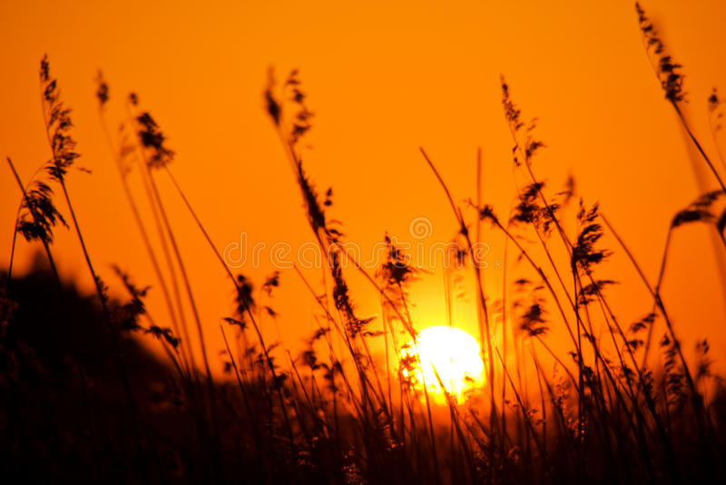 Sunset over meadow. Colorful orange sunset over meadow with reeds silhouetted in foreground royalty free stock photography