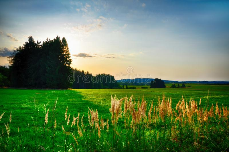 Sunset over meadow and spruce trees at summer evening, sunlight, sky, green grass, possitive light. Relaxing atmosphere. Countryside landscape stock photography