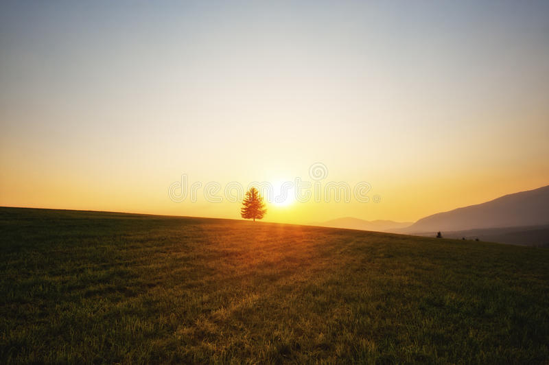 Download Sunset over meadows stock image. Image of tree, summer - 20976055