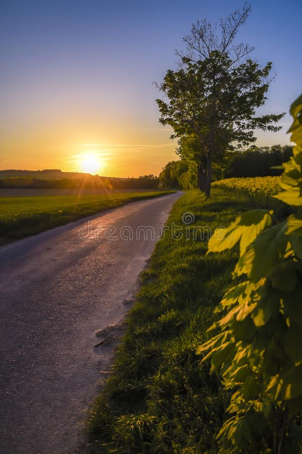Sunset over an old field road. Flowering rapeseed oil stock photo
