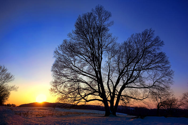Sunset over Old Tree at Valley Forge National Park stock images
