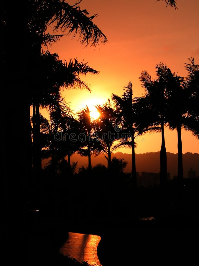 Sunset over Palm Trees stock image