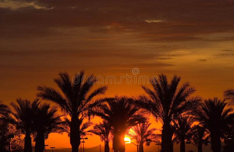Download Sunset over palm trees stock image. Image of sunset, vegas - 2567479