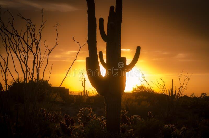 Sunset over Phoenix, Az with cactus tree royalty free stock photo