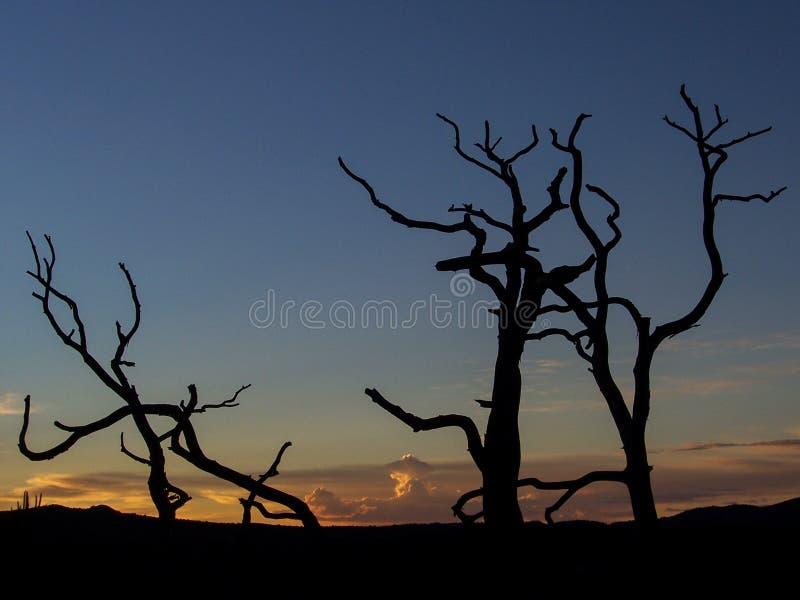 Sunset over prescott, Arizona stock images