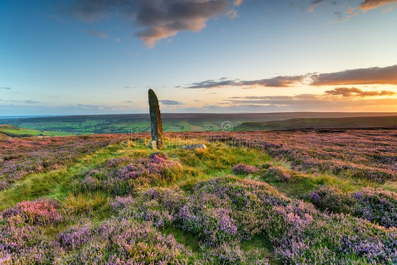 Sunset over purple heather in bloom at Little Blakey Howe. A bronze age round barrow topped with an ancient standing stone on Blakey Ridge in the heart of the stock images