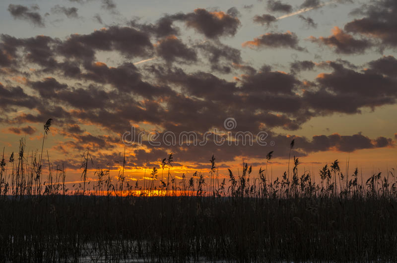 Sunset over reed stock images