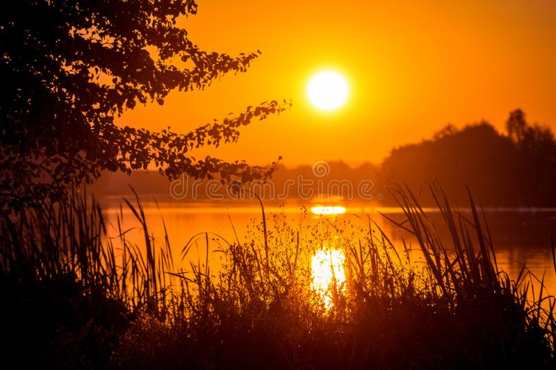 Sunset over the river. Silhouettes of trees and grass on the background of the river in the evening_ stock image