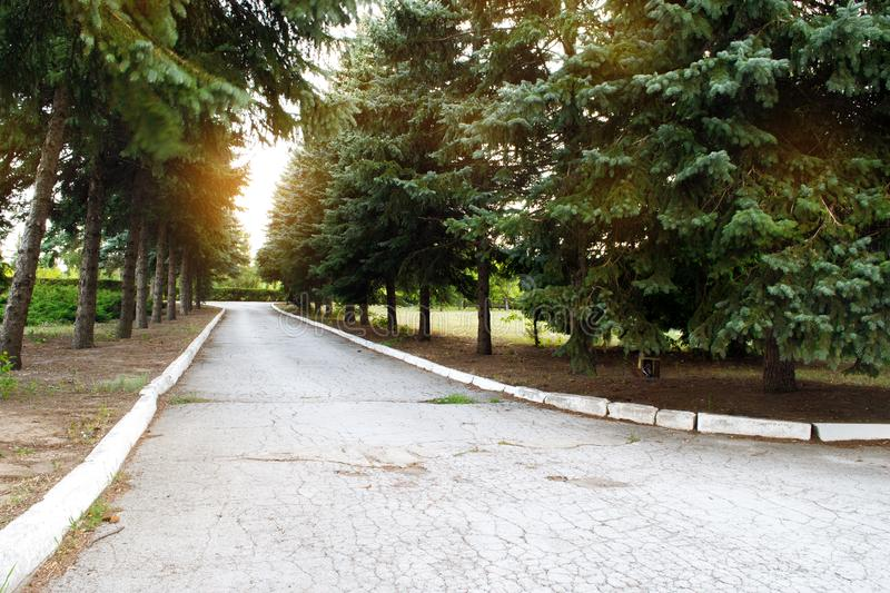 Sunset over the road. Sunrise in summer beautiful park. Bright sunny day in park. The sun rays illuminate  green grass and trees. stock photo