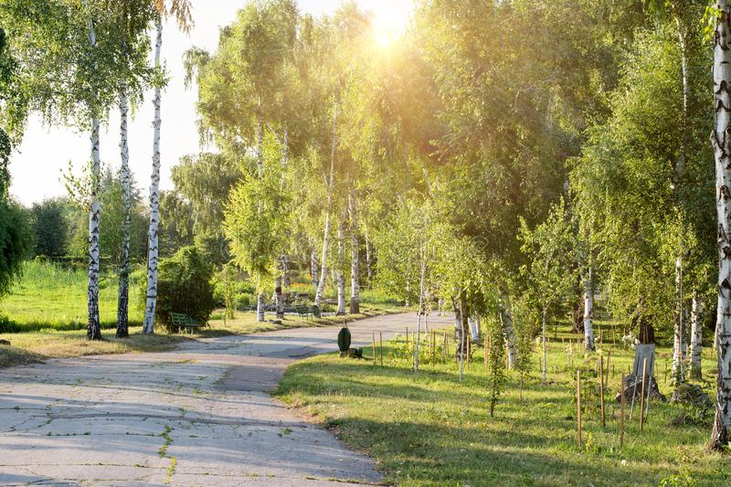 Sunset over the road. Sunrise in summer beautiful park. Bright sunny day in park. The sun  rays illuminate green grass and trees stock photography