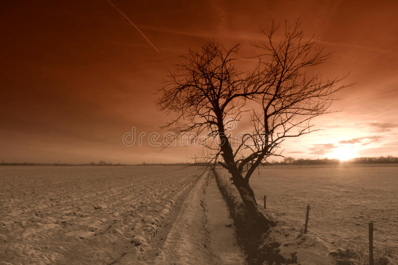 Sunset over snowy landscape. Colorful sunset over snow covered fields with tree silhouetted in foreground royalty free stock images