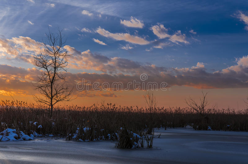 Sunset over tree and reed royalty free stock photo