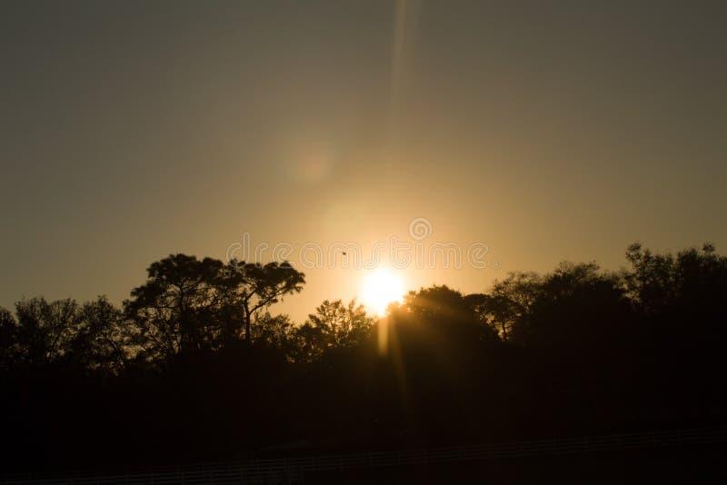 Sunset over trees with bird stock photos