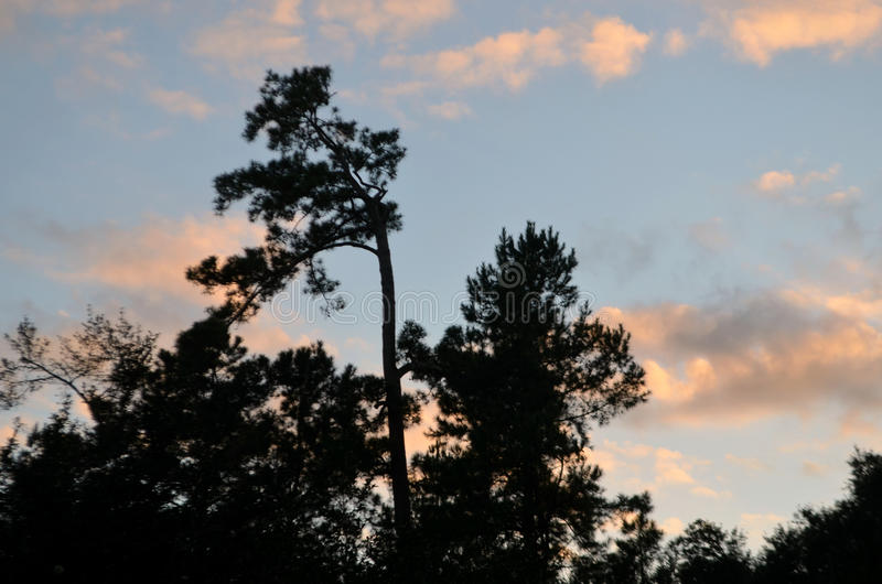 Sunset over treetops. Sunset in blue sky with white clouds over treetops in park royalty free stock image