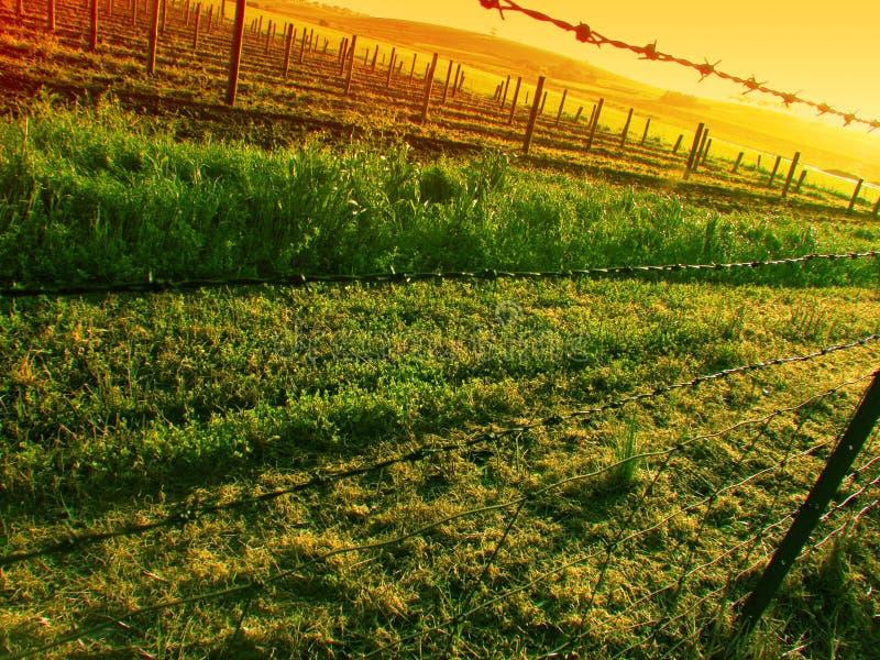 Sunset over Vineyard stock image