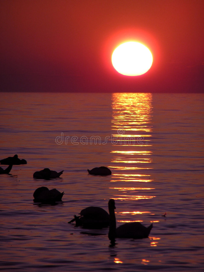 Sunset over water. A sunset over the water. Reflections of the sun are rippling in the waves. There are ducks and swans swimming royalty free stock photography