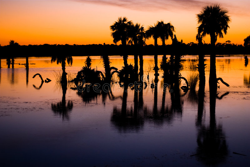 Sunset over wetlands stock photo