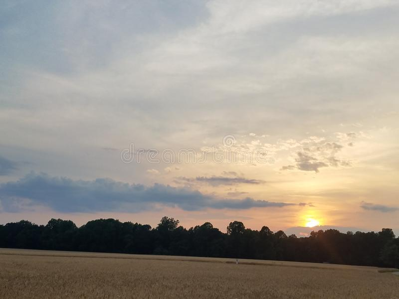 Sunset over a wheat field royalty free stock images