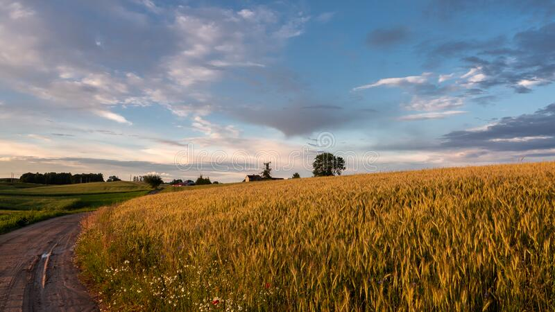 Sunset over a wheat field and a country road. Warm, summer evening royalty free stock photography