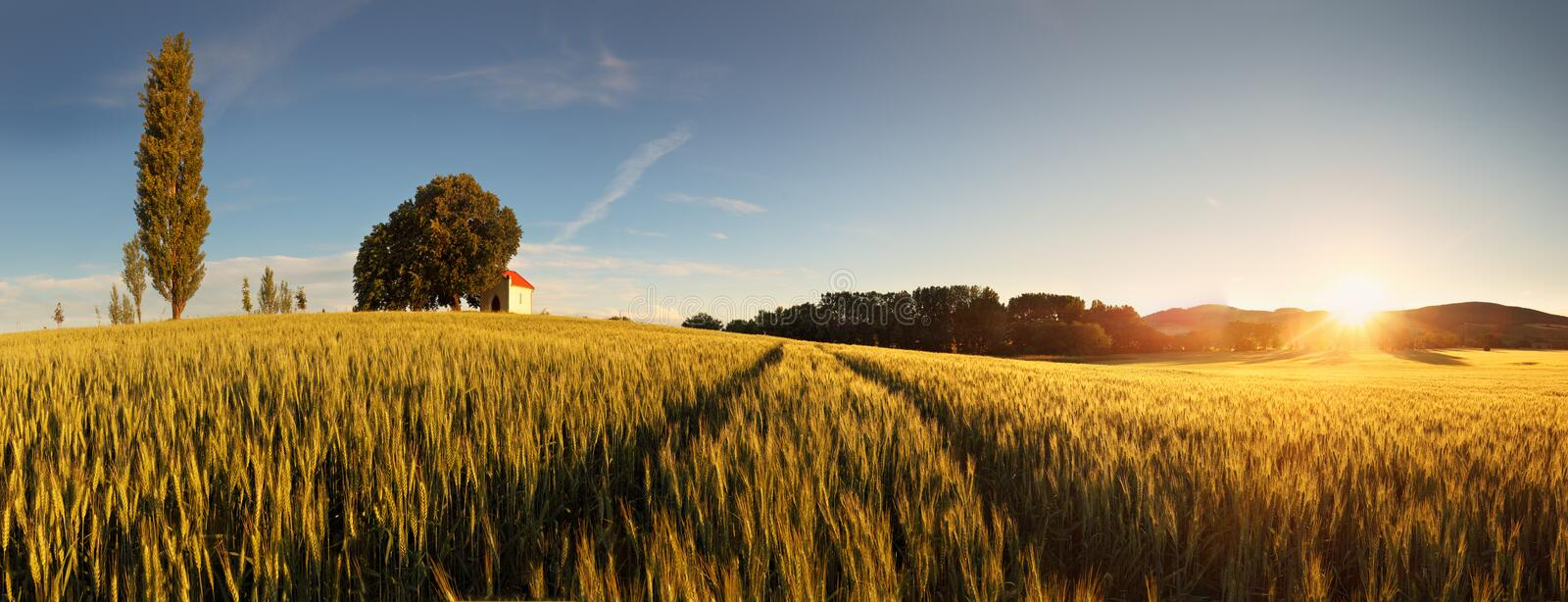 Download Sunset Over Wheat Field With Path In Sl Stock Photo - Image: 25662324