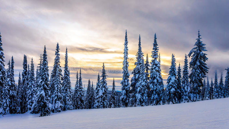 Sunset over a Winter Landscape with Snow Covered Trees on the Ski Hills near the village of Sun Peaks. In the Shuswap Highlands of central British Columbia stock image