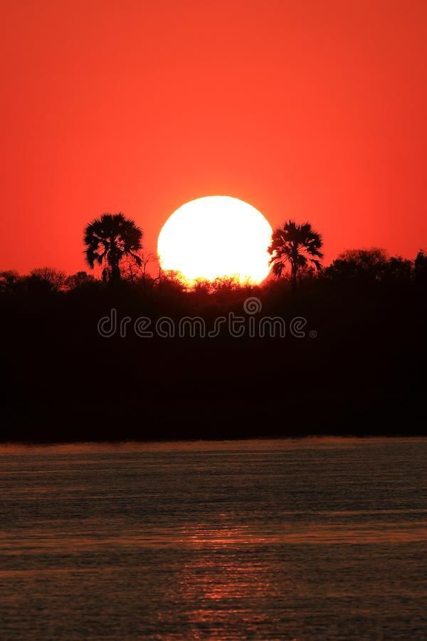 Sunset over the Zambeze river. Sunset over the Zambezi River, between Zimbabwe and Zambia, Africa. The sun, white, begins to hide behind the vegetation, between royalty free stock photography