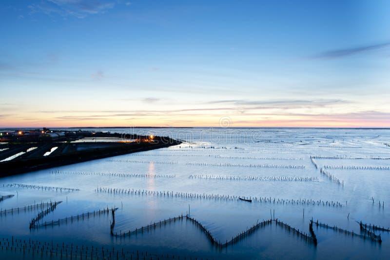 Sunset on oyster rack