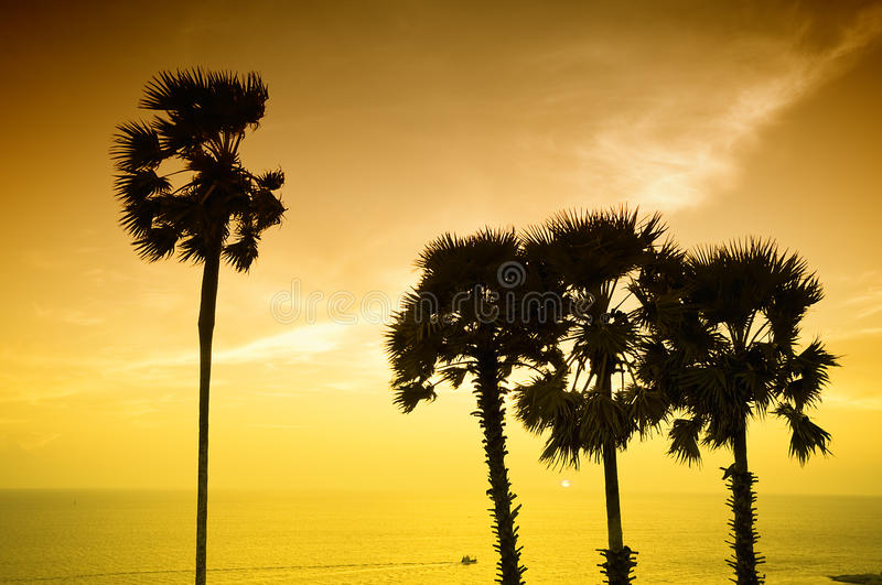 Download Sunset With Palm Royalty Free Stock Photos - Image: 14879288