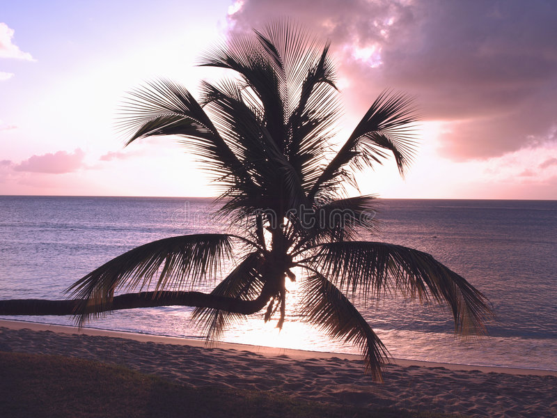 Sunset Palm stock photography
