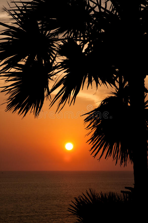 Download Sunset with palm stock image. Image of nature, evening - 30825715